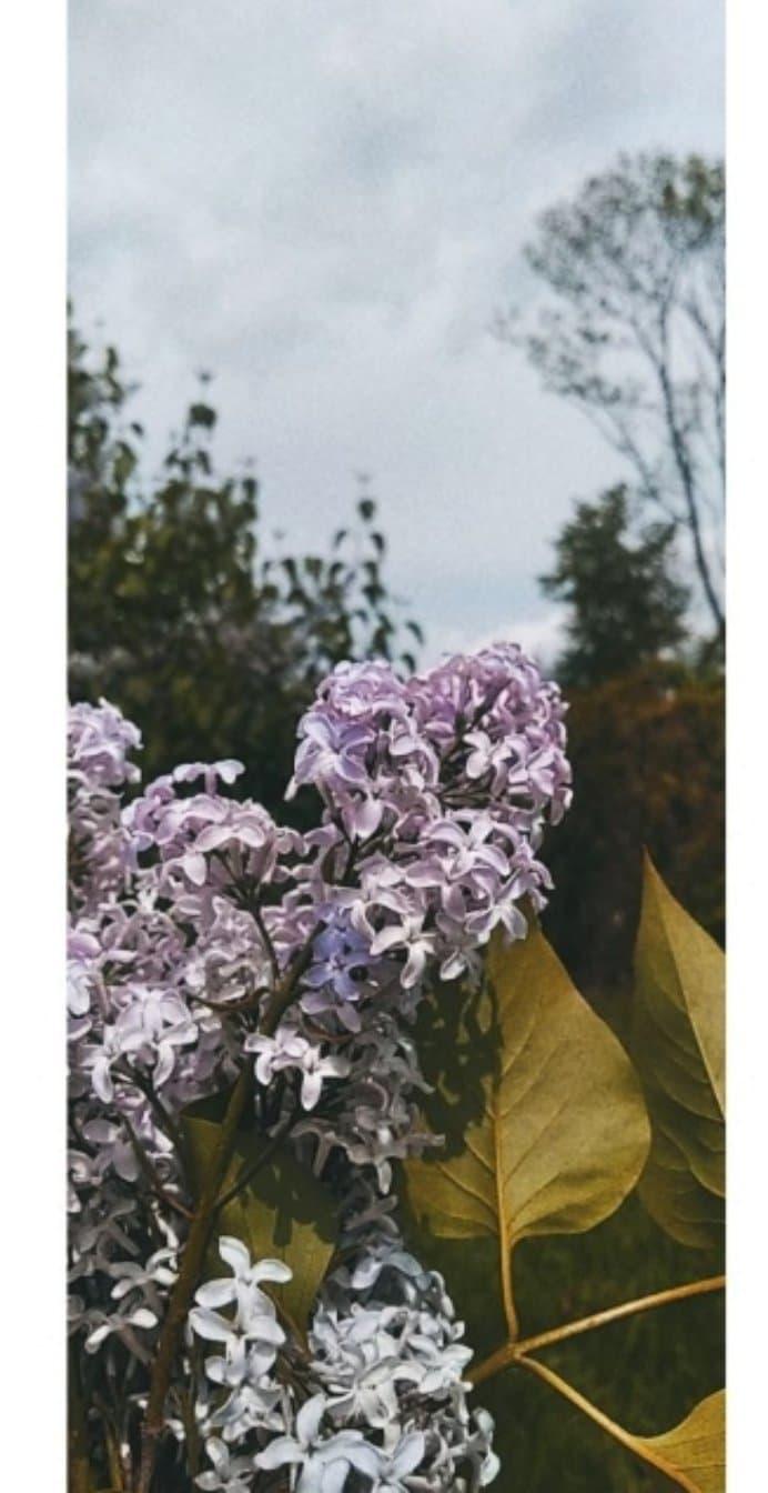 Zdj nr 14 Oblicza wiosny