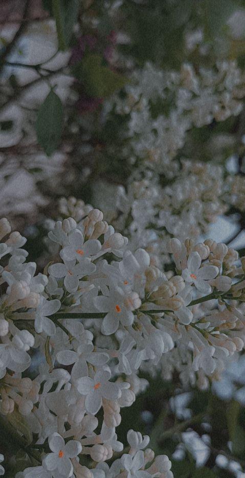 Zdj nr 20 Wiosna w obiektywie